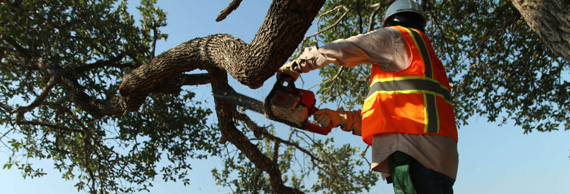 Cedar Eaters Professional Hand Crew Cutting Chipping